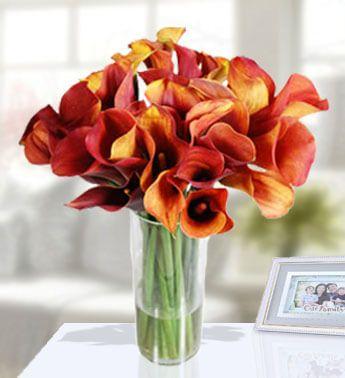 callas in a vase